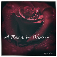 a rose in bloom-mike helms-christian-music
